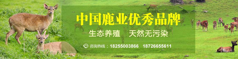 梅花鹿养殖基地