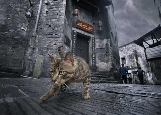 古街精灵素描拍摄手法与闯入镜头的猫咪形成古建筑虚幻与现实的视觉冲