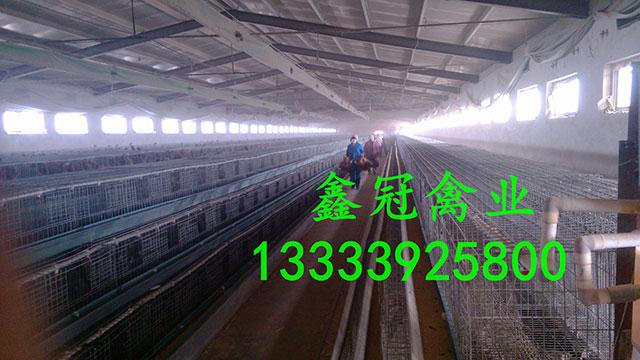 新利18体育|官方网站厂家-鹤壁市鑫冠禽业有限公司