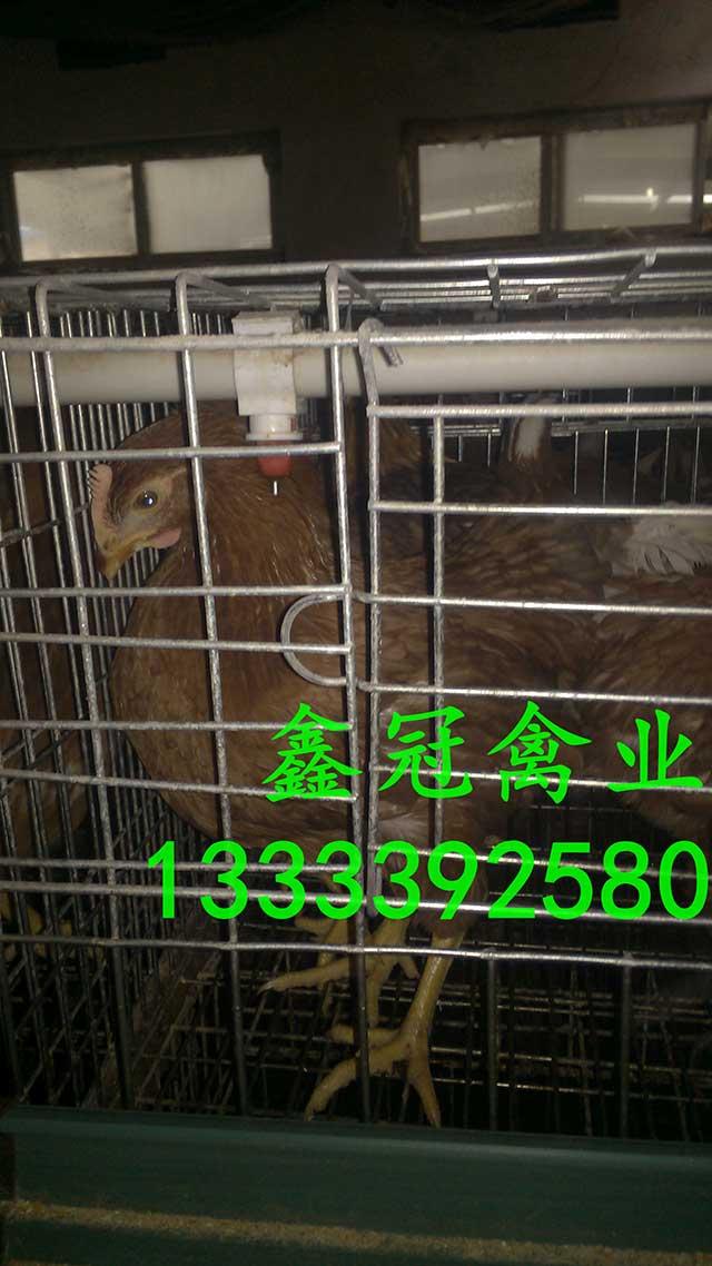 新利18体育|官方网站-鹤壁市鑫冠禽业有限公司