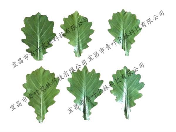 出口綠竹葉