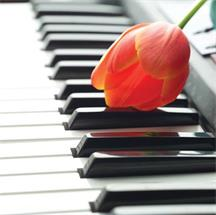 学习钢琴可以提高个人气质~