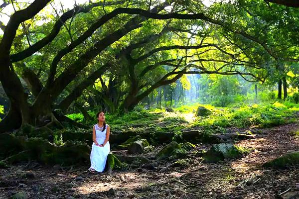 杨家溪生态旅游
