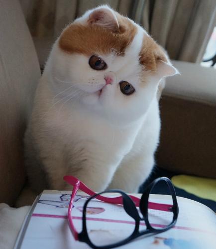 加菲猫也是如此,只有当主人拿着满满的食物杂货时,猫咪们才会主动的来